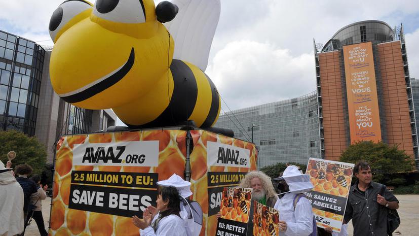 Для спасения пчел в Европе ограничено использование пестицидов