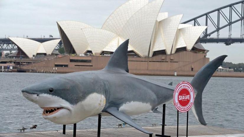 Австралийские чиновники поссорились из-за акул-убийц