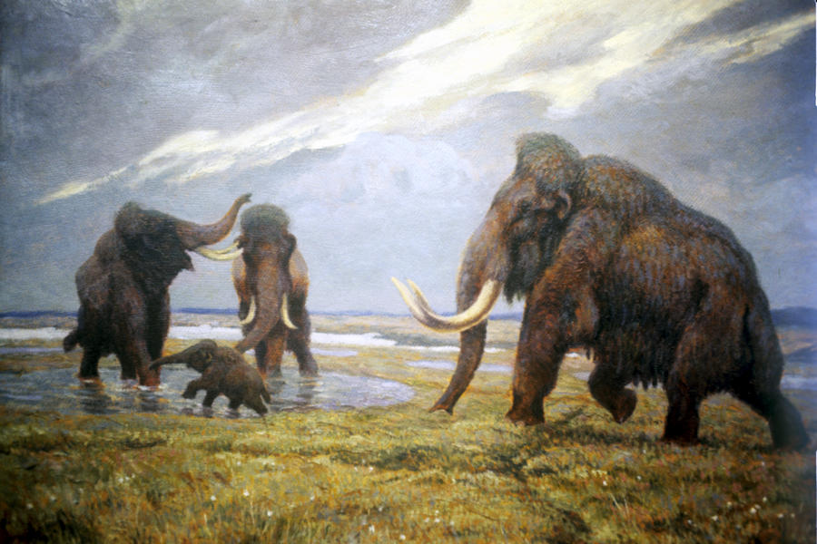 Геном мамонта: учёные близки к воссозданию доисторического зверя