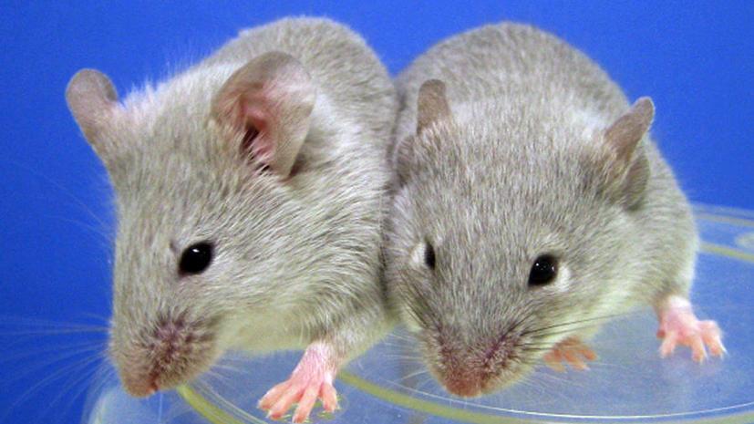 Американские учёные: посттравматический синдром можно предотвратить