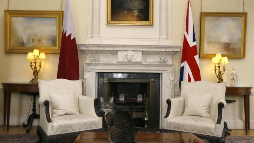 Кошка 007: британские СМИ подозревают питомца министра финансов в шпионаже