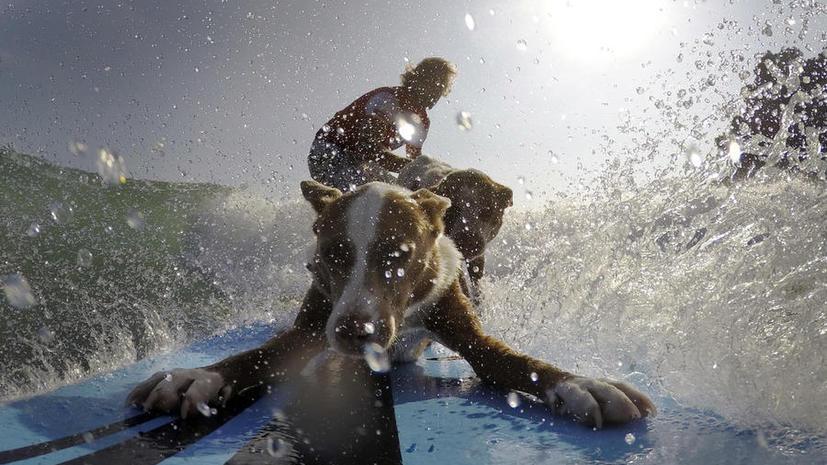Австралийский сёрфингист и дрессировщик собак покоряет океан вместе с питомцами