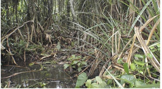 В Африке найдено растение, указывающее на залежи алмазов