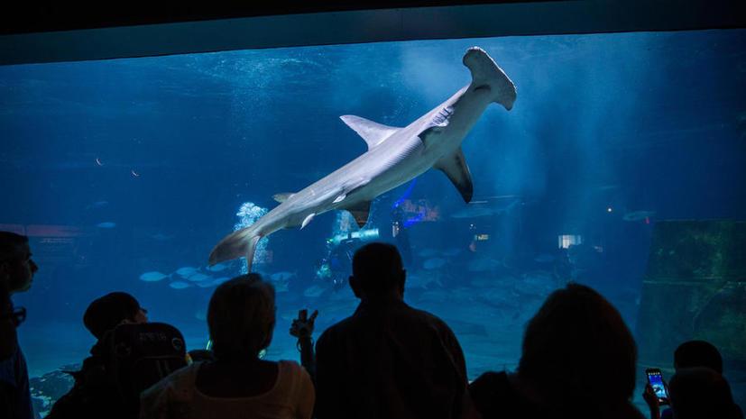 В Индии запретили охотиться на акул ради плавников