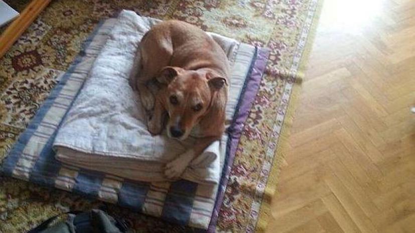 Спасти Экскалибура: пользователи соцсетей следят за судьбой собаки заразившейся Эболой медсестры