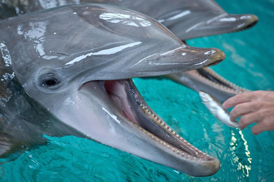 Украинские боевые дельфины уплыли в самоволку