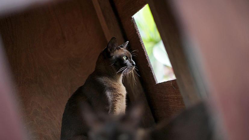 Домашние коты истребляют миллионы птиц и мелких млекопитающих