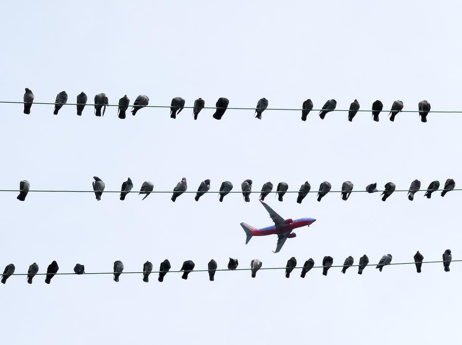 Пассажиры не получат компенсаций за рейсы, отменённые из-за птиц