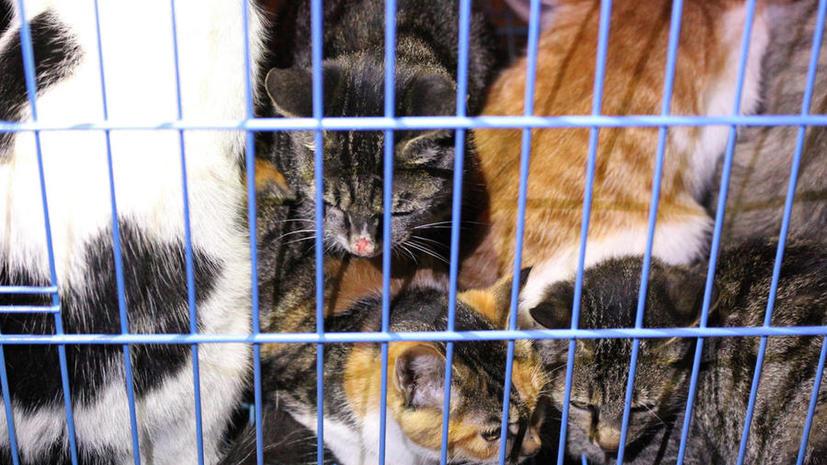 Китайские волонтёры отправились в горы спасать кошек от гурманов