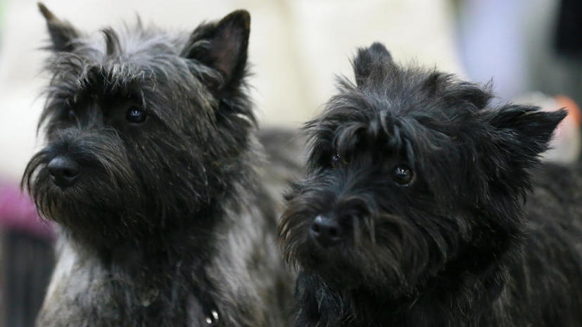 Депутаты Госдумы предлагают штрафовать россиян за небрежное отношение к собакам и кошкам