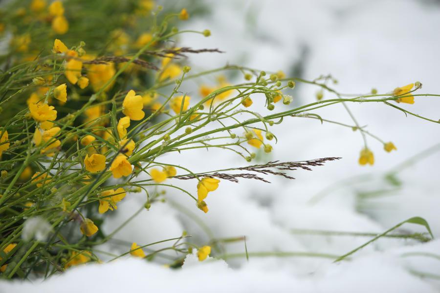 Пользователи соцсетей со всей России делятся фотографиями первого снега