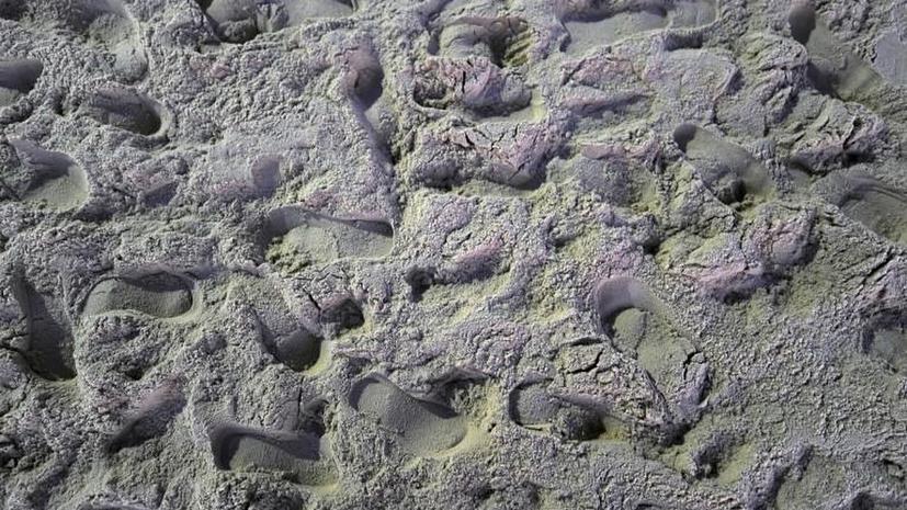 В Северном Норфолке обнаружены человеческие следы возрастом 850 тыс. лет
