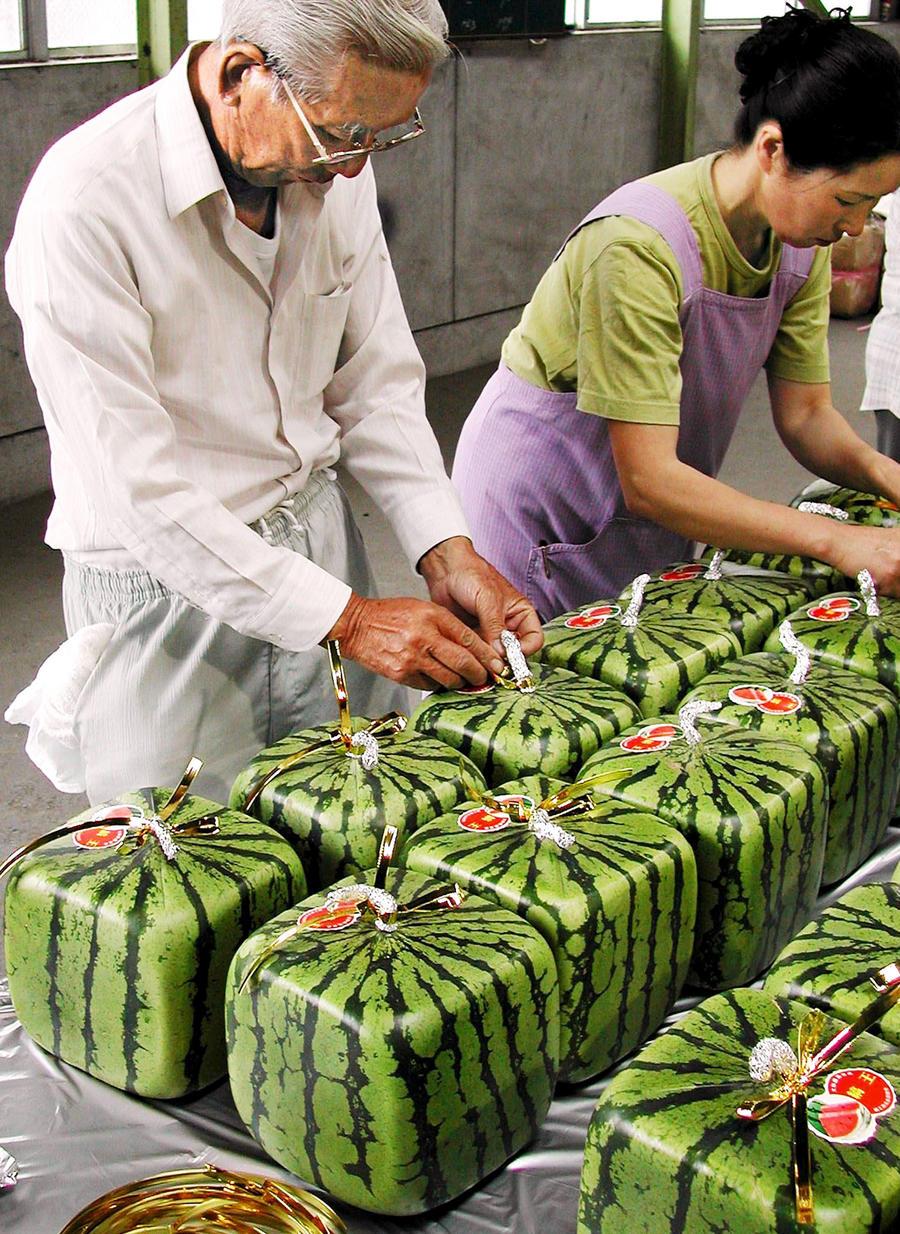 Россияне попробовали на вкус квадратный арбуз из Японии