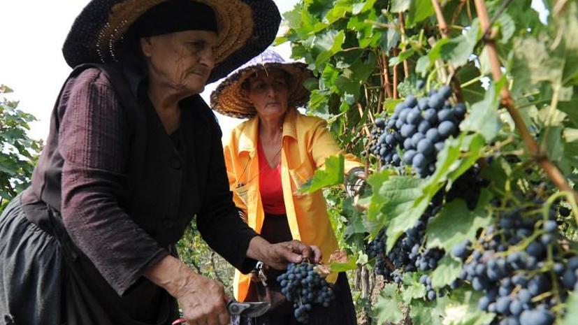 Геннадий Онищенко: Грузинские производители представили на экспертизу прокисшее вино
