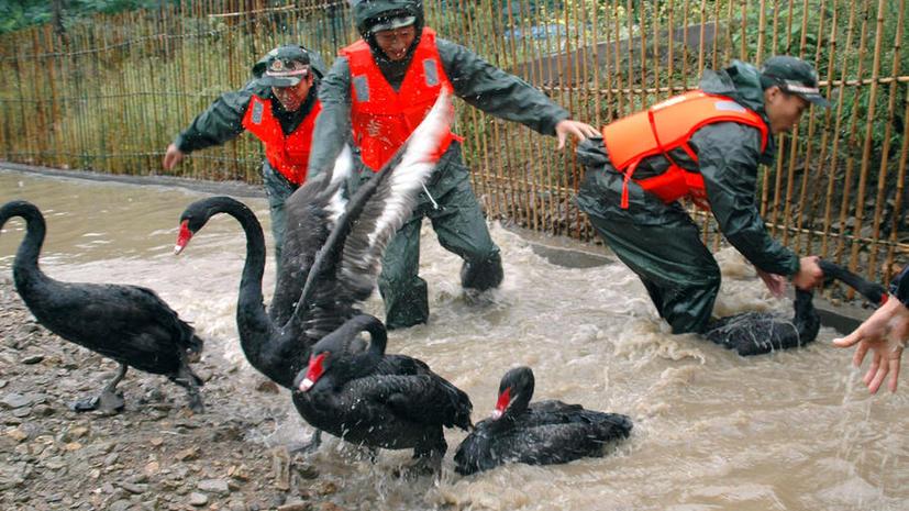Из пражского зоопарка срочно эвакуируют животных из-за наводнения