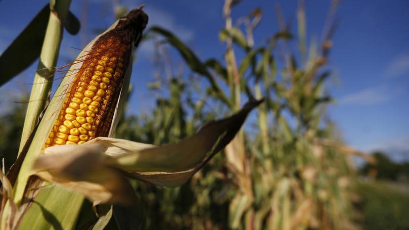 ГМО-гигант Monsanto свернёт строительство завода по переработке кукурузы на $90 млн из-за убытков