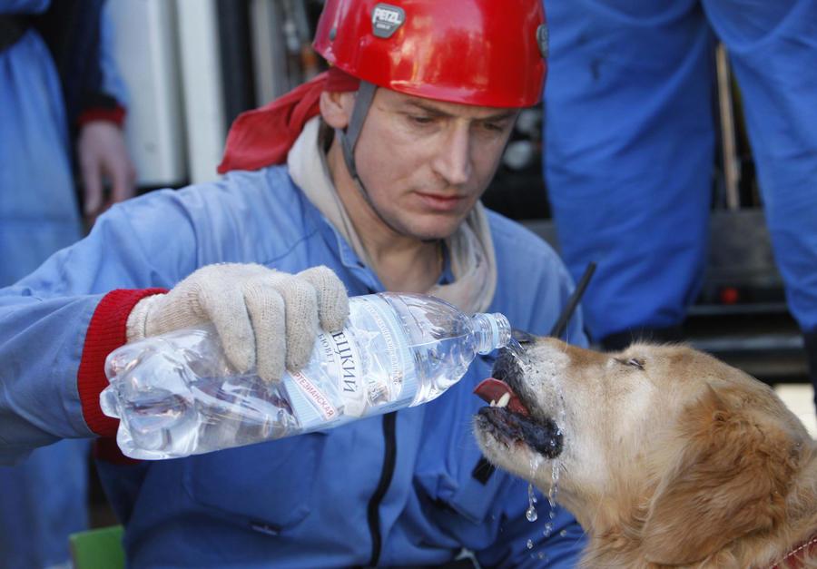 Команда «Ищи!» — как животные спасают людей