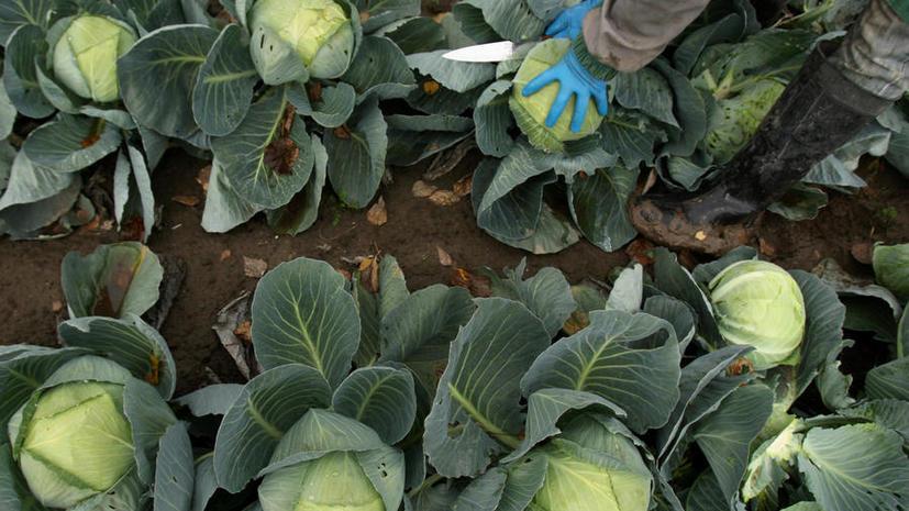 Россия против ГМО: Натуральная продукция – наше преимущество на мировом рынке
