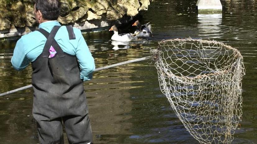 В Китае найдены сотни мертвых уток