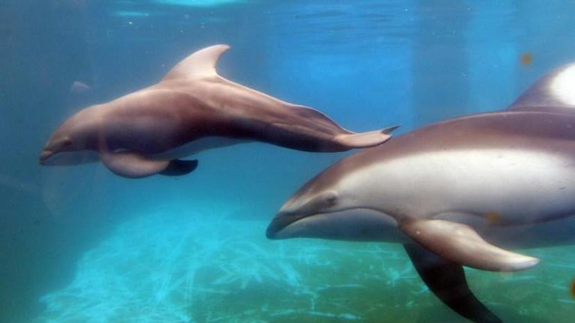 Дельфины запоминают имена своих собратьев