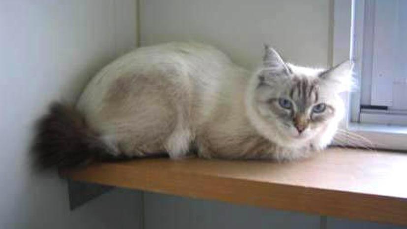 Кот, подаренный японскому губернатору Владимиром Путиным, выпущен из карантина