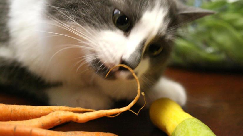 Вегетарианцы из Австралии чуть не убили своего котёнка овощной диетой