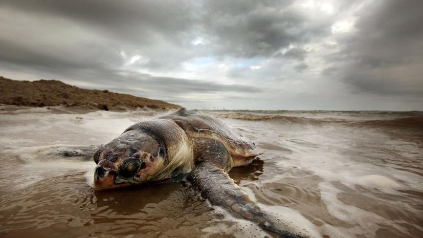 BP согласилась выплатить $18 млрд штрафа за катастрофу в Мексиканском заливе
