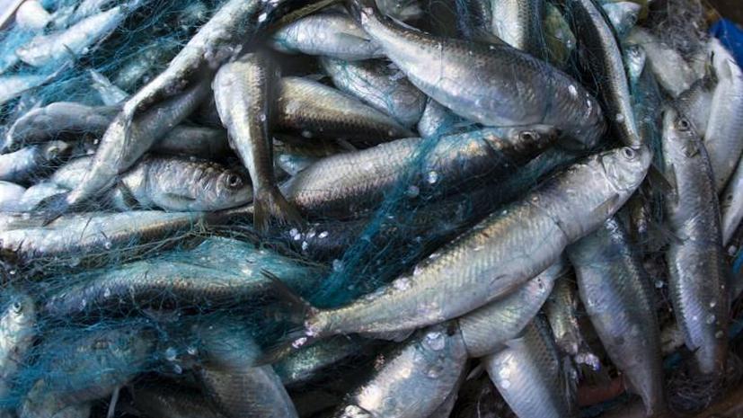 Рыбий жир не спасает от сердечных болезней