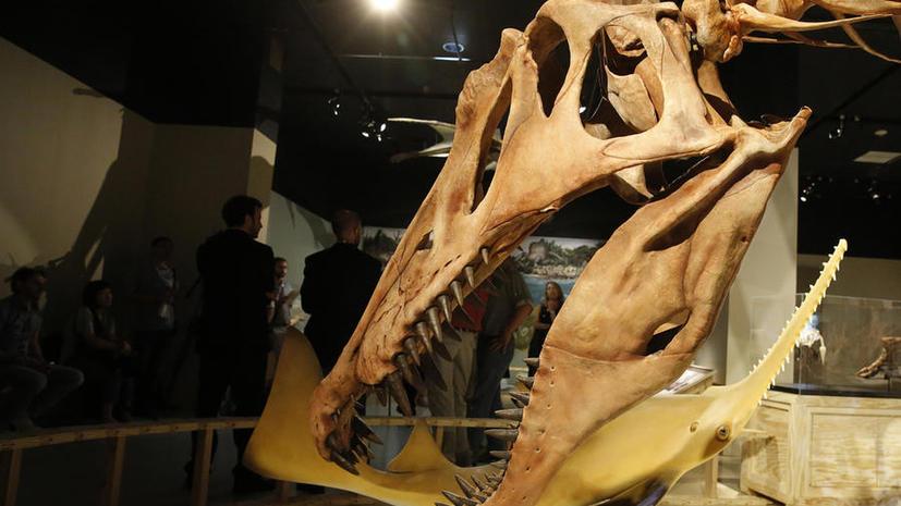Российские учёные представили новую версию исчезновения динозавров