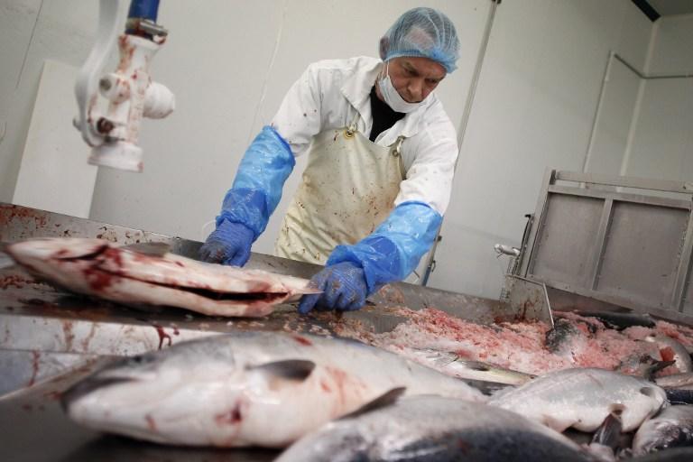 Экологи США призывают торговые сети к бойкоту генно-модифицированной рыбы