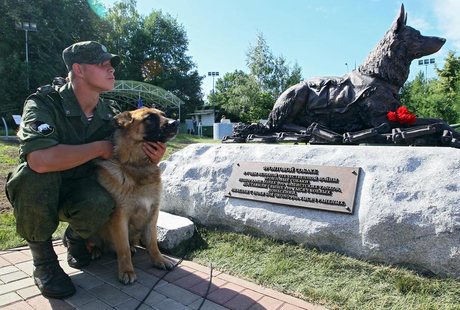 Четвероногие друзья человека: RT публикует истории собак-героев