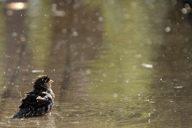 Столичные ливни снова бьют рекорды - москвичей ждёт неделя сплошных дождей