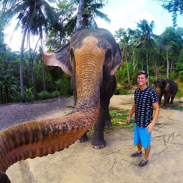 Слоно-селфи: Животные прославляют себя с помощью автопортретов