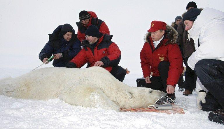 Любовь к белым медведям объединила Россию и США