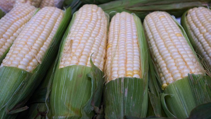 Исследование: Из-за глобального изменения климата снижается количество питательных веществ в зерновых