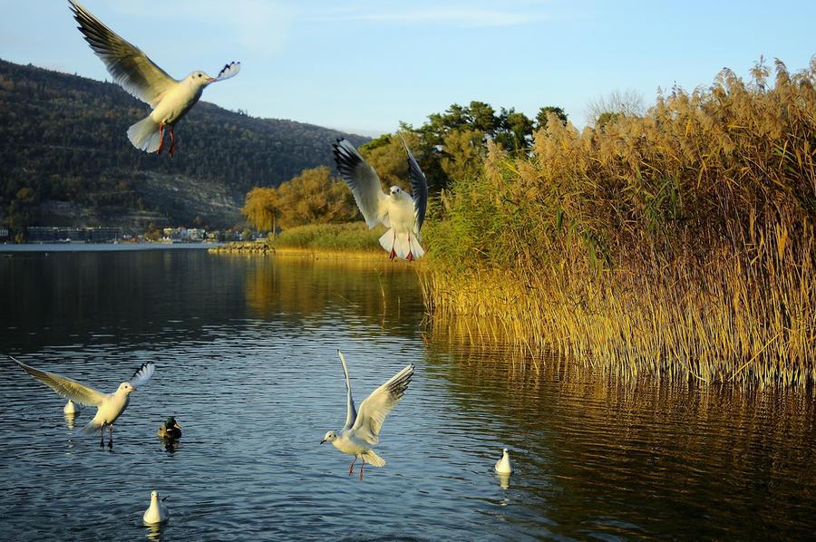 В водах швейцарского озера Бьен обнаружены следы радиоактивного цезия-137