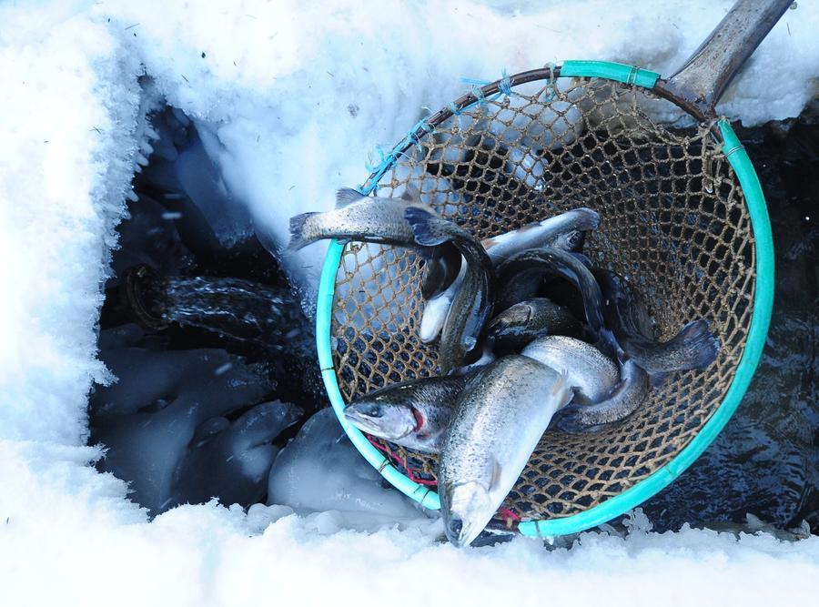 Потребители смогут отслеживать путь рыбы до прилавка через интернет