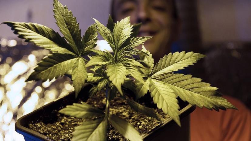 Зависимость от марихуаны способствует привыканию к табаку