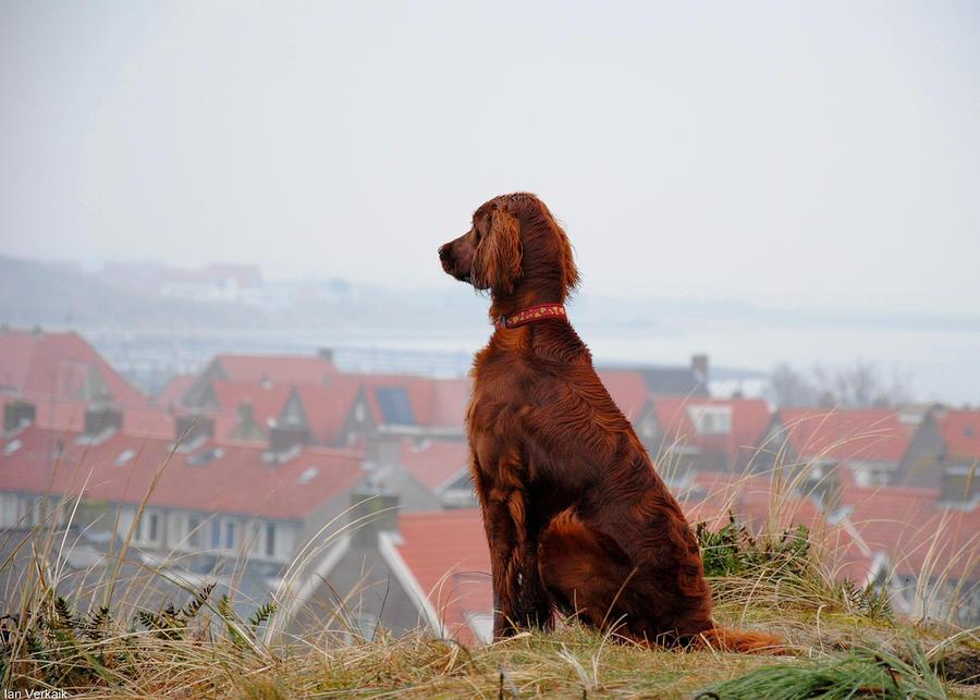 Создано дистанционное управление для собак