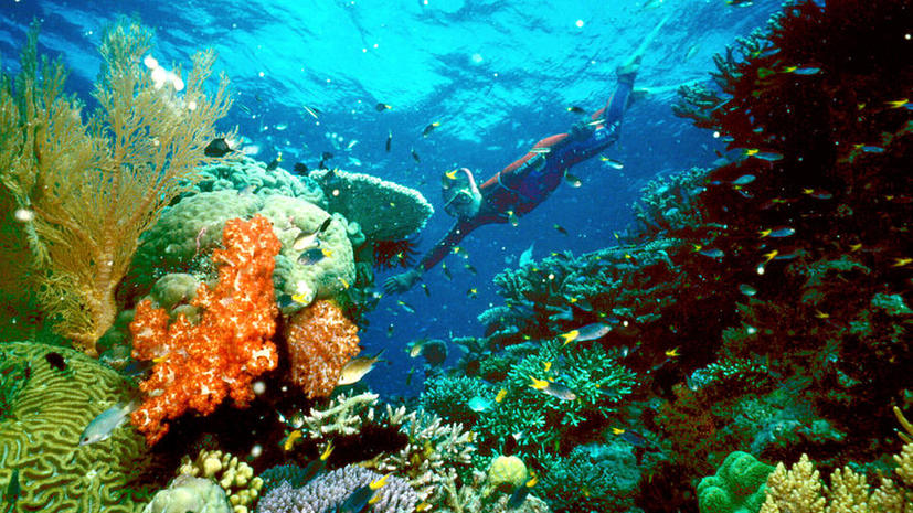 Власти Австралии собираются превратить дно океана в свалку строительного мусора