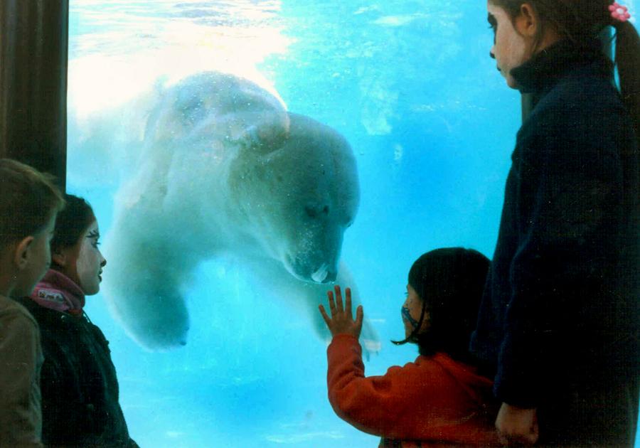 В зоопарке Аргентины фейерверки до смерти напугали медведя