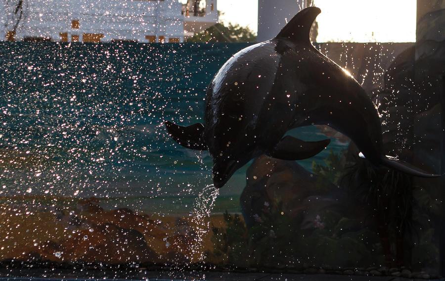 В Санкт-Петербурге построят дельфинарий и океанариум