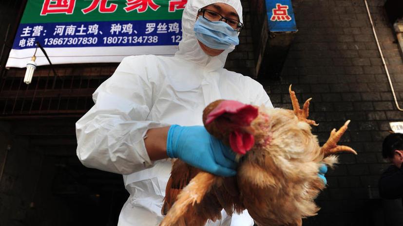 Возвращение птичьего гриппа: в Китае заразились уже 24 человека