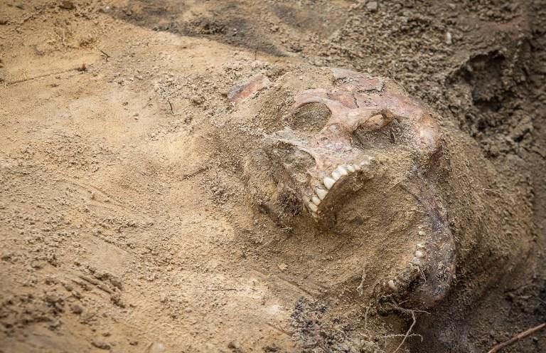Останки десятков детских тел обнаружены на территории бывшей школы во Флориде