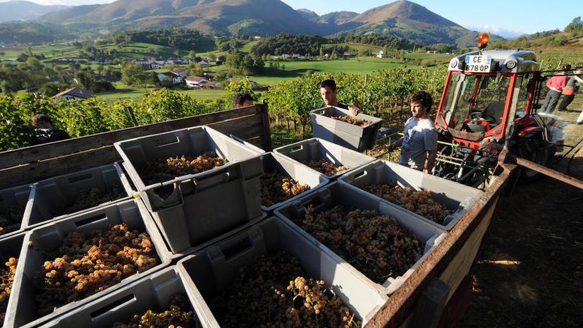 The Daily Telegraph: Миру угрожает дефицит вина