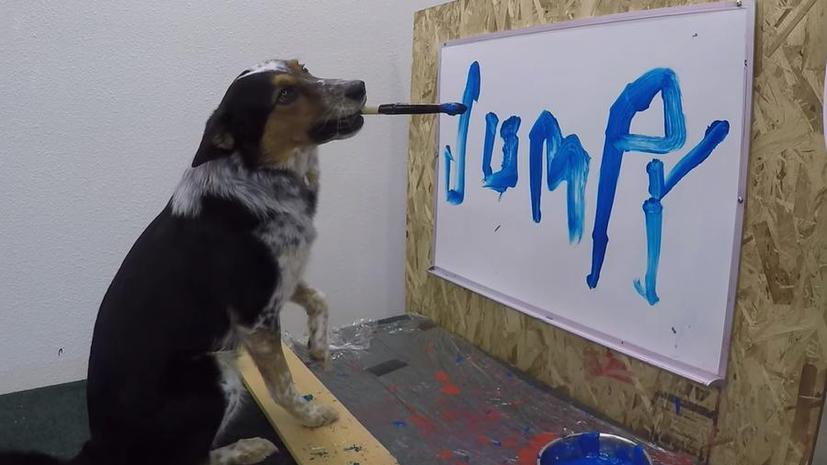 Пушистый Джеймс Бонд: герой интернета пёс Джампи научился писать