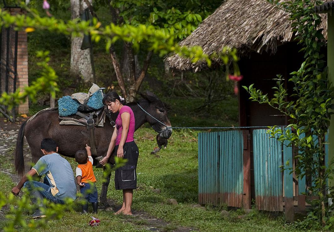 Колумбийское правительство меняет ослов на лошадиные силы