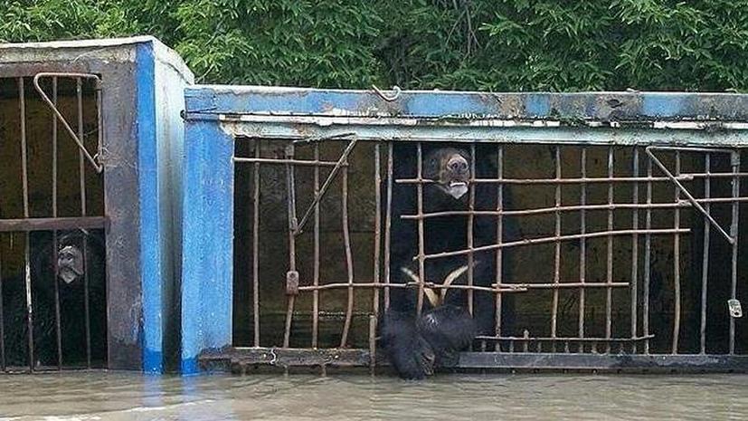 В Уссурийске оказался затоплен зоопарк, несколько животных погибли