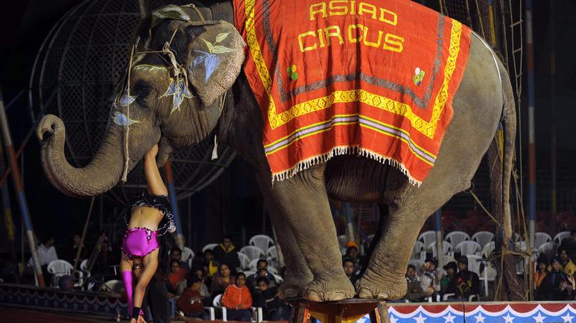 Индия может запретить использовать животных в цирке