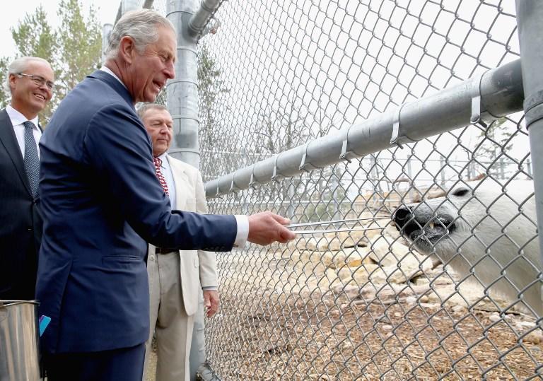 Sky News: Сравнив Путина с Гитлером, принц Чарльз превратил обычный визит в международный инцидент